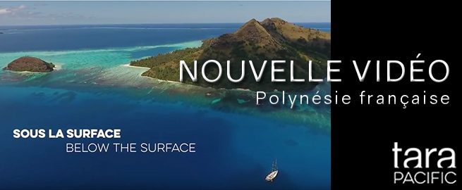 http://corail.univ-perp.fr/wp-content/uploads/2015/06/french-polynesia_NEW-VIDEO2-655x270.jpg