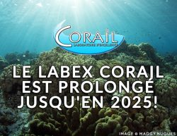 http://corail.univ-perp.fr/wp-content/uploads/2019/02/LabEx-Renewal-250x193.jpg