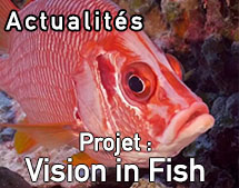 FishVision_Annonce_May2019